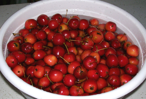 photo showing about five pounds of freshly picked Red Crabapples