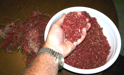 photo of sumac berries separated from the bracts.	You can see the bracts on the left.