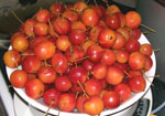 Red Crabapples, sold by the pound