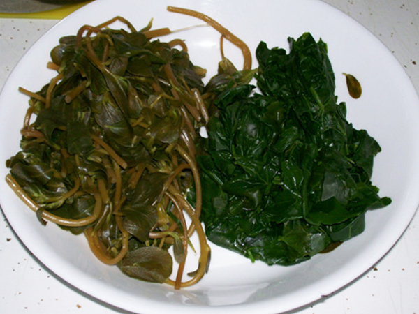 photo showing cooked purslane and cooked lambsquarter from the garden.