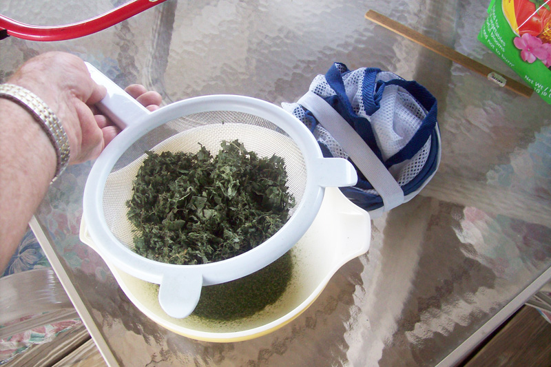 Photo showing sassafras leaves going from mesh drying bag to strainer.