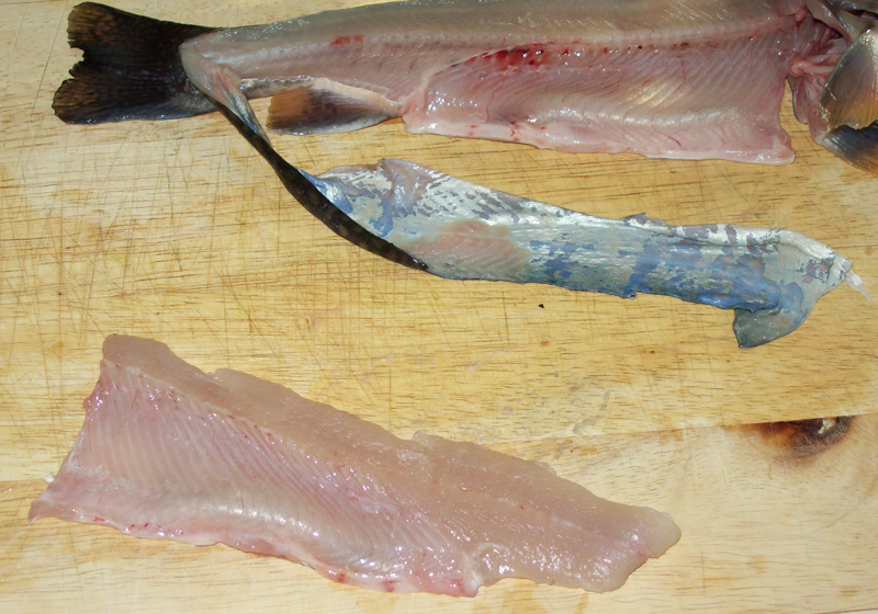 photo showing one side of the brook trout's filet removed.